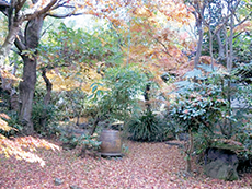 敷地内では秋にきれいな紅葉が楽しめます