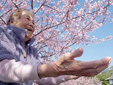 春になると、敷地内の10本の桜が咲き誇る